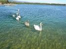 Les habitants du lac_11